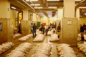 Tokio-Fishmarket-12