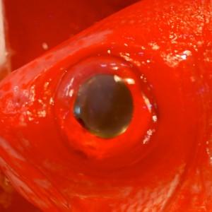 Tokio-Fishmarket-22