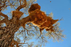 Namibia-010