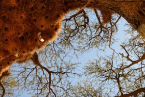 Namibia-014