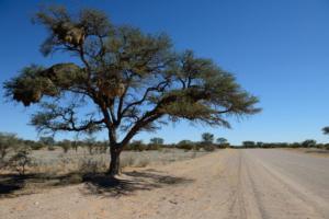 Namibia-016