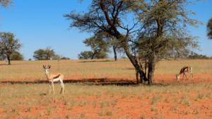 Namibia-018