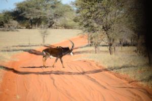 Namibia-025