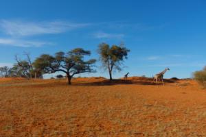 Namibia-026