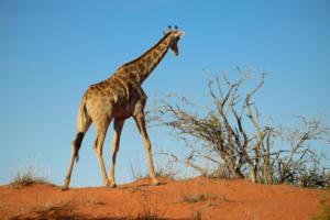 Namibia-028