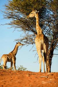 Namibia-031