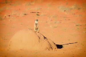 Namibia-033