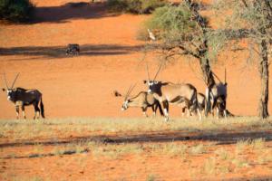 Namibia-034