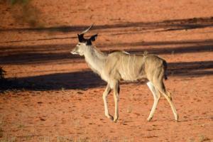 Namibia-036