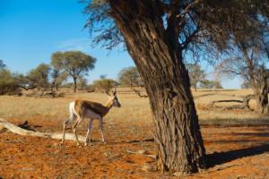 Namibia-044