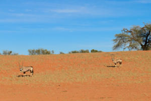 Namibia-045