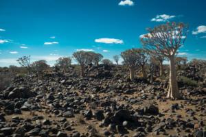 Namibia-052