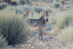 Namibia-095