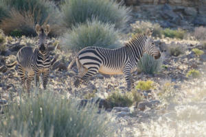 Namibia-096