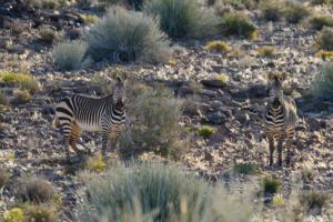Namibia-097