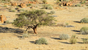 Namibia-099