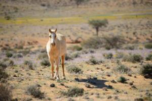 Namibia-109
