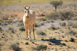 Namibia-110
