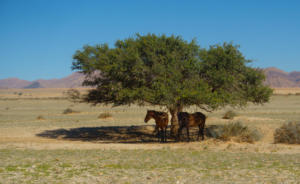 Namibia-112