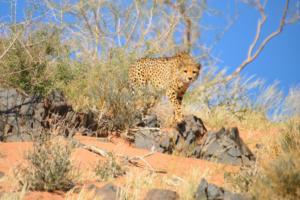 Namibia-148