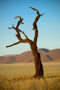 Namibia-164