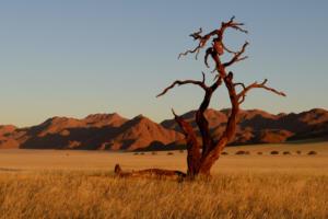 Namibia-166