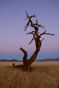 Namibia-173