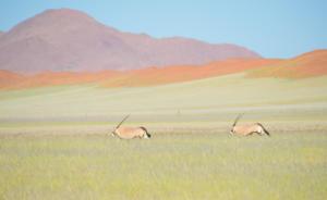 Namibia-187