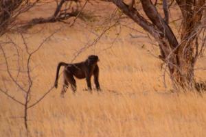 Namibia-245