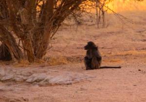 Namibia-246