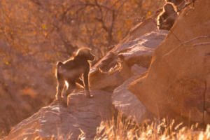 Namibia-248
