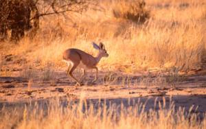 Namibia-252
