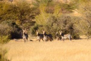 Namibia-259