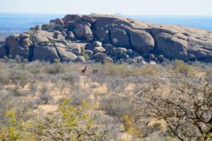 Namibia-269