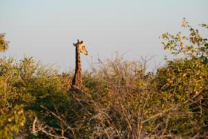 Namibia-299