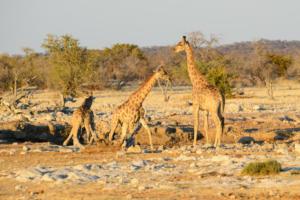 Namibia-301