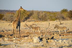 Namibia-302