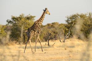 Namibia-304
