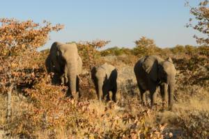 Namibia-320