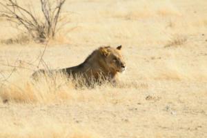 Namibia-323