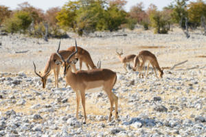 Namibia-327
