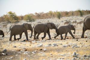 Namibia-344