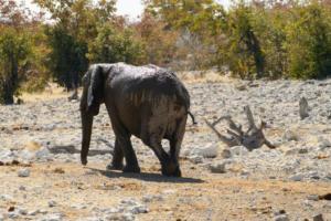 Namibia-361
