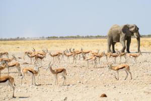 Namibia-364