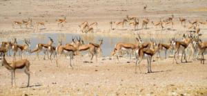 Namibia-368