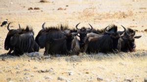 Namibia-370