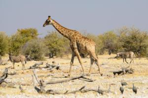 Namibia-374