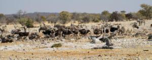 Namibia-376