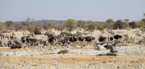 Namibia-377