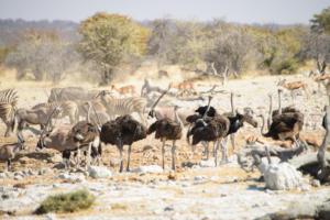 Namibia-378
